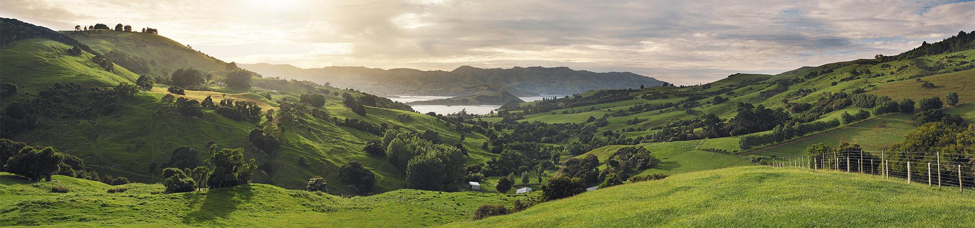 Neuseelandhirsch